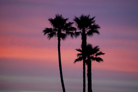 Palm trees silhouetted against colorful sunset in Santa Cruz California