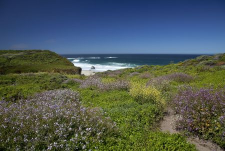 View of a hiking trail with wildflowers in Garrapate State Park in California
