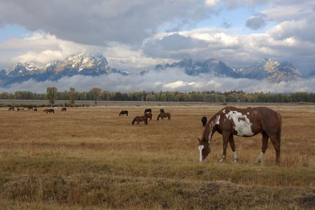 Horse standing in front of the Teton mountain range in Wyoming