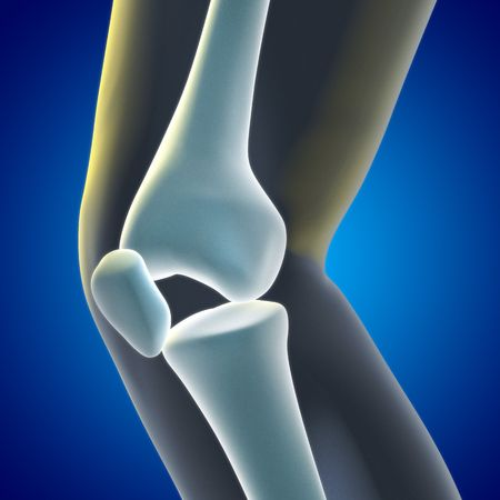 A Medical illustration of a knee xray showing knee and bones