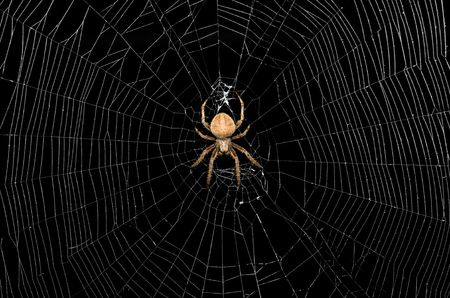 Large spider in the center of a web on a black background Banco de Imagens