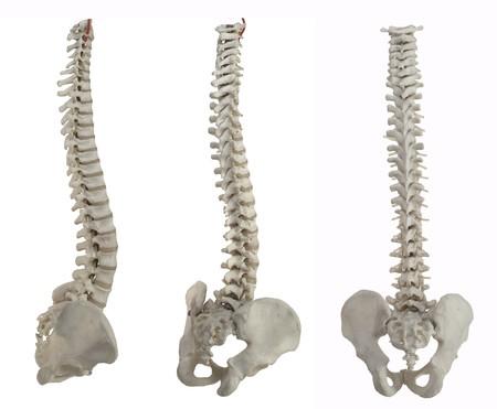 columna vertebral: 3 columnas de la m�dula espinal en blanco Foto de archivo