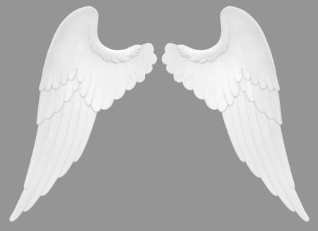 alas de angel: Alas de �ngel aislados en un fondo blanco