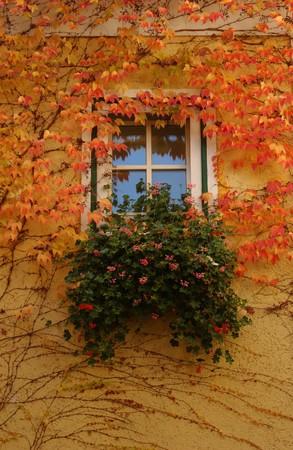 window: Bavarian window in autumn