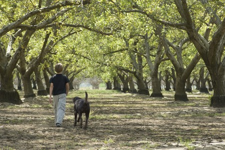 country boy: Young boy walking through the woods with his dog