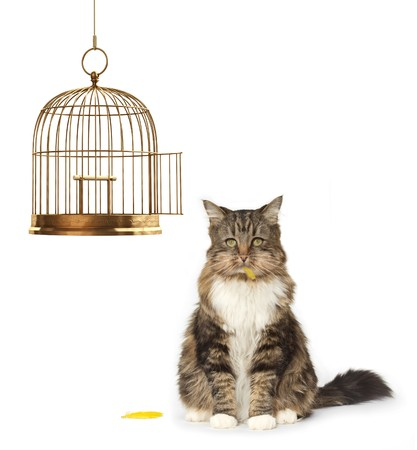 Cat with a full mouth sitting next to an empty bird cage photo
