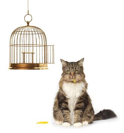 ladron: Gato con una boca completa está sentado al lado de una jaula de pájaro vacía