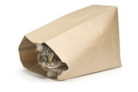 Tabby cat inside a paper bag illustrating a guarded secret from the saying the cats in the bag  Imagens