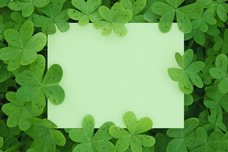 lucky clover: A Blank Card Surrounded in a Patch of Clovers. Stock Photo