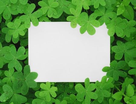 A Blank Card Surrounded in a Patch of Clovers. Stock Photo - 7051131