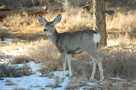 Wild deer Фото со стока