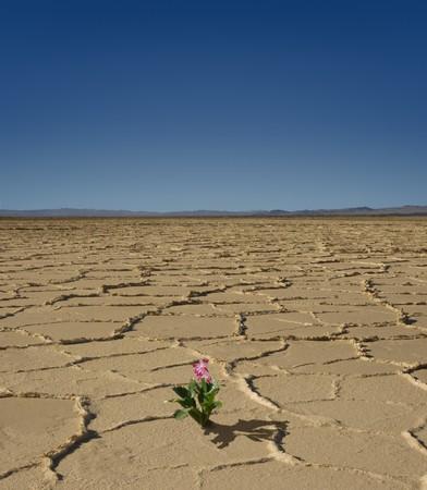 flowering plant: Magnoliophyta piccolo nel mezzo di un deserto deserto Archivio Fotografico