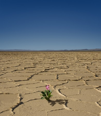Small flowering plant in the middle of a desert wasteland Stock Photo