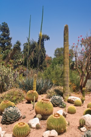 Desert in Arizona with barrel and saguaro cactus