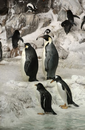 emperor penguins on arctic landscape Stock Photo
