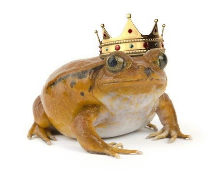 Orange tropical frog wearing a crown on a white background photo
