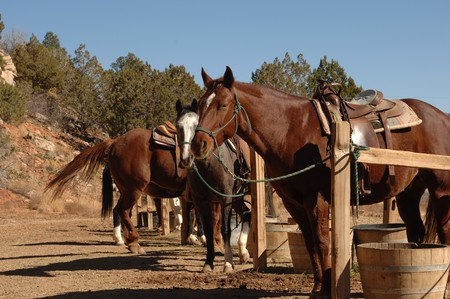hitching post: Horses tied up at the hitching post