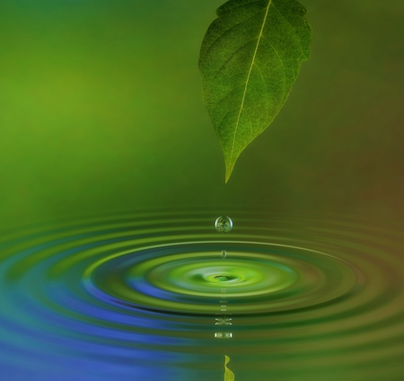 water on leaf: A water drop from a leaf causing a ripple on the surface reflecting a green jungle atmosphere Stock Photo