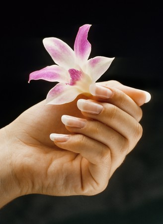 manicure: Womans hand with french manicured nails holding lilly on black background Stock Photo