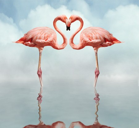 love bird: pink flamingos making a heart shape in reflection pond