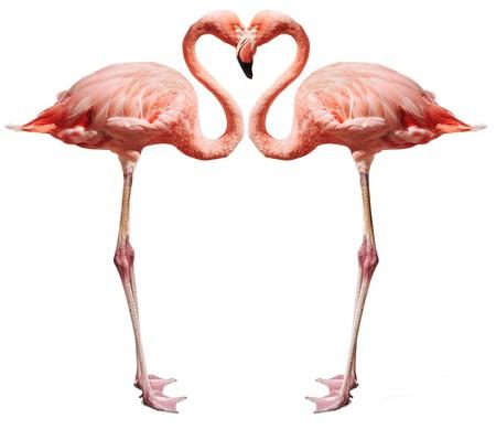 flamingos: Flamingos making a heart shape on white Stock Photo