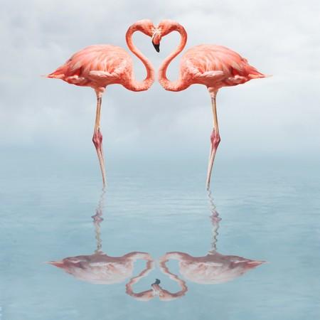 flamingos: Flamingos in water making a heart shape