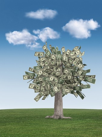 money tree on grass against a blue sky