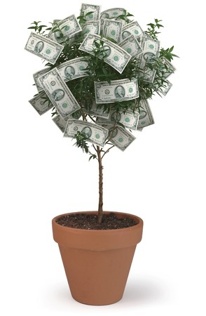 pot of money: Money Tree on White