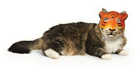 pretentious: House cat on a white background wearing a tiger mask Stock Photo