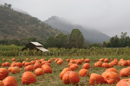 Landscape orientation of a pumpkin patch in October photo