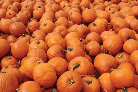 何百ものオレンジ色のカボチャ