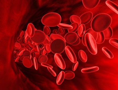 정맥 안에 적혈구의 3D 렌더링.