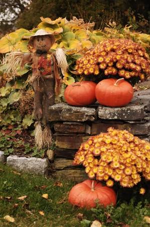 scarecrow: Espantap�jaros y calabazas junto al muro de piedra con flores y hojas ca�das