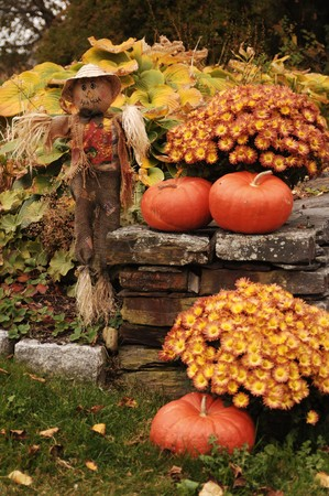 scarecrow: scarecrow and pumpkins next to stone wall with flowers and falling leaves