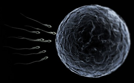 Sperm swimming toward the egg at a microscopic zoom over black photo