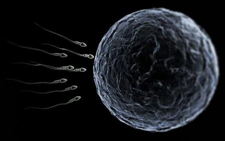 microscopisch: Sperma zwemmen naar de eieren bij een microscopische gezoem over zwart