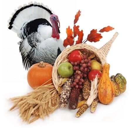 Füllhorn mit Herbst Ernte Blätter, Weizen Kürbis, Squash, Mais, Äpfel, Birnen und Trauben Standard-Bild