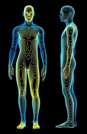 anatomia humana: Un concepto m�dico del cuerpo humano Foto de archivo