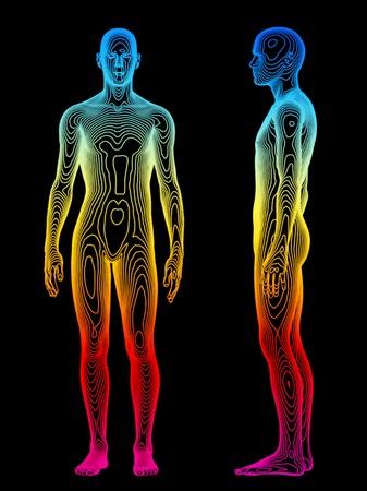 corpo umano: Un concetto medico del corpo umano