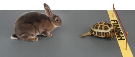 거북이 토끼에 맞서 우승하다.