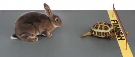 deliberate: turtle winning the race against a rabbit