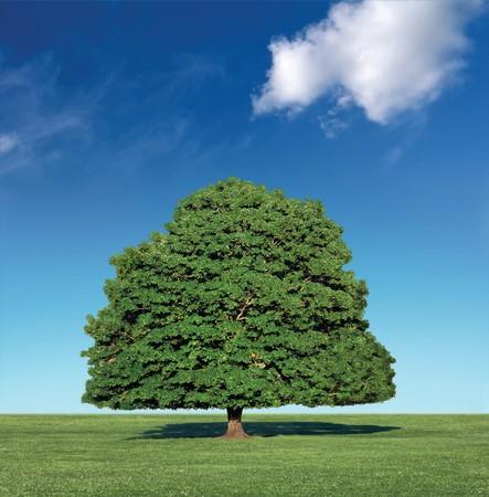 plantando arbol: �rbol perfecto contra un cielo azul con nubes de sombrero blanco  Foto de archivo