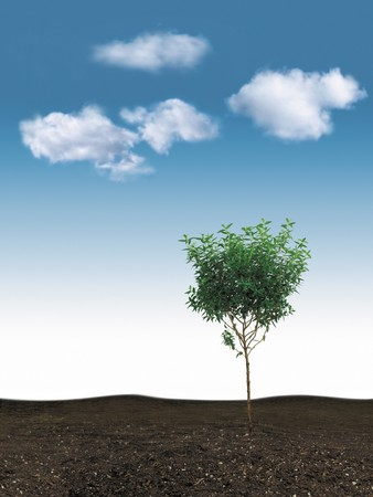 small growing tree with blue sky