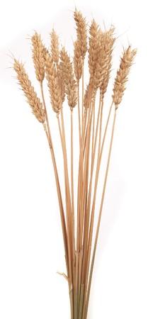 wheat stalks Zdjęcie Seryjne