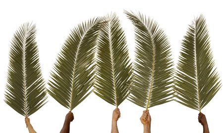 Five hands waving palm branches against a white background Stock fotó