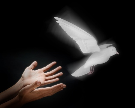 Twee handen op een zwarte achtergrond vrijgeven een lichtgevende duif in vlucht Stockfoto