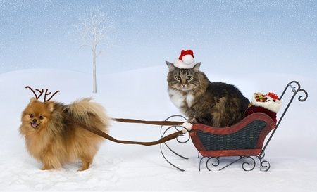 A Pomeranian wearing antlers pulls a sleigh with gifts driven by a cat wearing a Santa hat