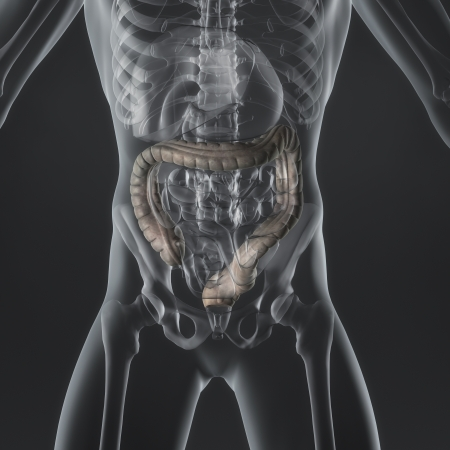 An illustration of a man s anatomy showing the large intestine in an x-ray style