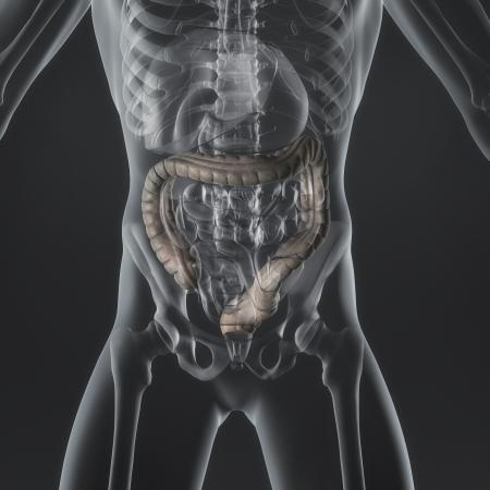 intestino grueso: Una ilustración de la anatomía de un hombre s que muestra el intestino grueso en un estilo de rayos X Foto de archivo