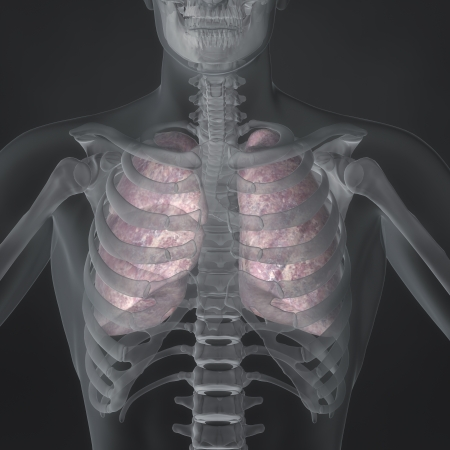 An Illustration of a man s anatomy showing the lungs in an x-ray style  Stock Photo